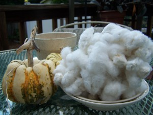 Chem-Free Cotton for Spinning--The Home Gnome