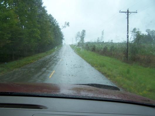 Tree falling across roadway