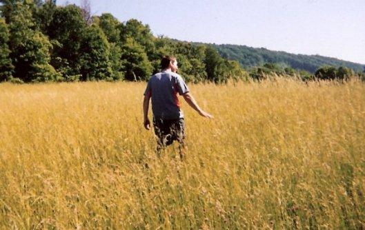 fields-of-gold